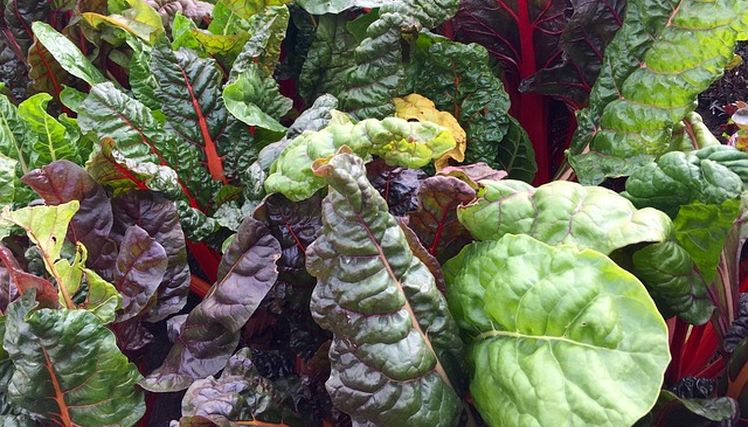 listova zelenina